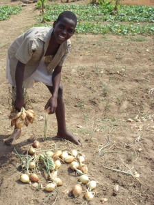 Harvesting onions in the garden at FOSC's home shelter for street children Kawama