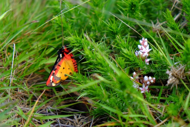 red and yellow butterfly