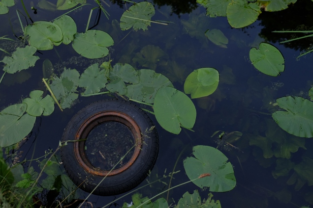 Tyremaster tyre in canal surrounded by lilly leaves