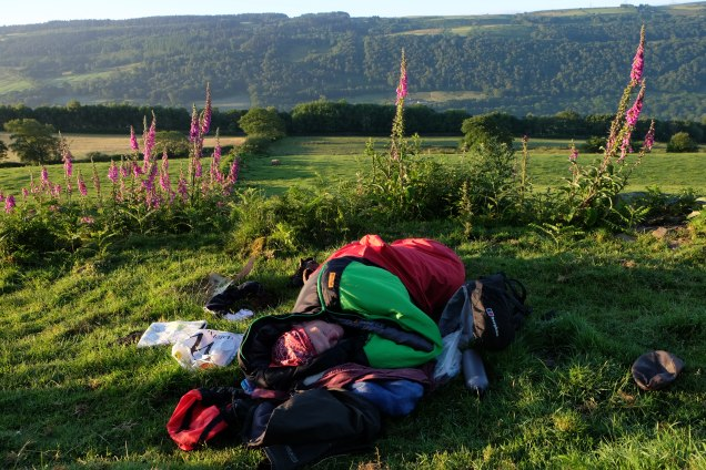 man sleeping in sleeping bag, foxgloves