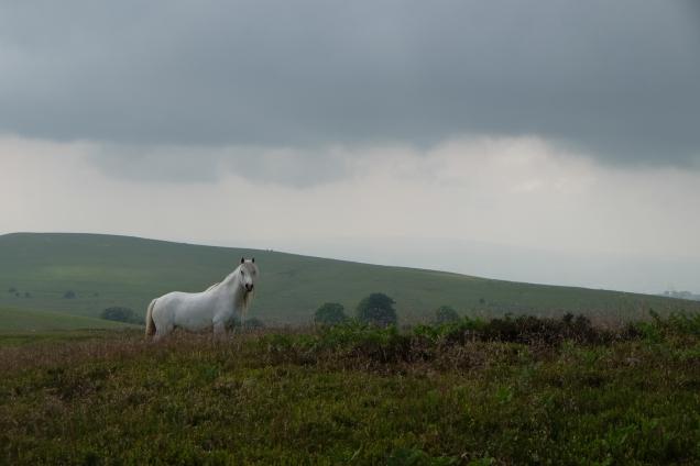Welsh grey, white pony, dark cloud, dark moorland