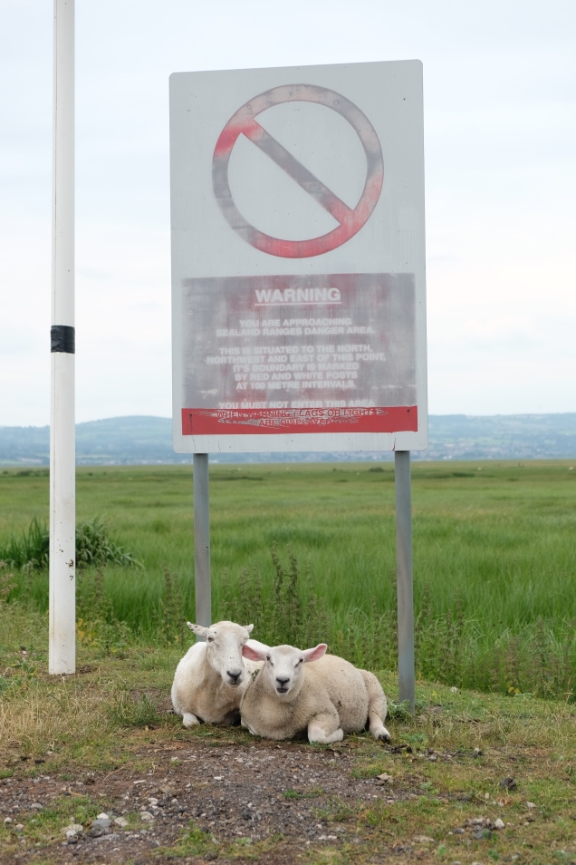 MOD range warnng sign, sheep
