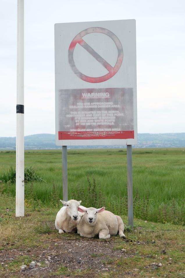 MOD range warnng sign, sheep