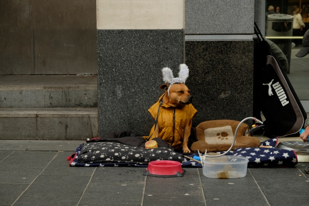 Dog with tinsel ears sitting on pavement