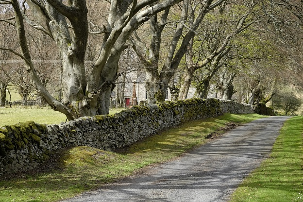 road and stone wall lead past line of beach trees, funeral monuments in back ground