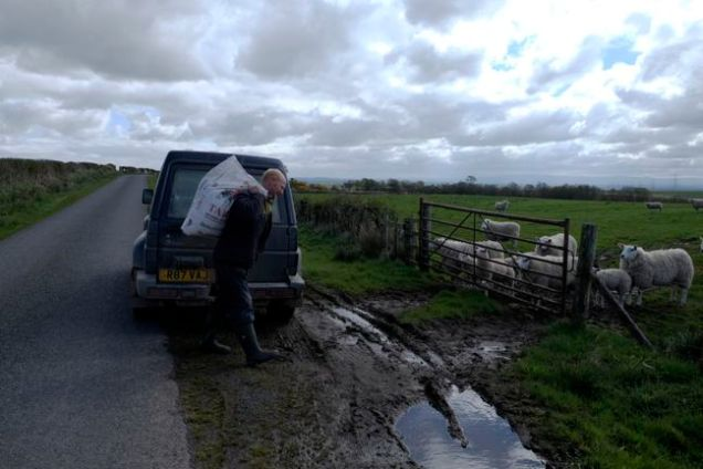 Car, man with white sack, sheep