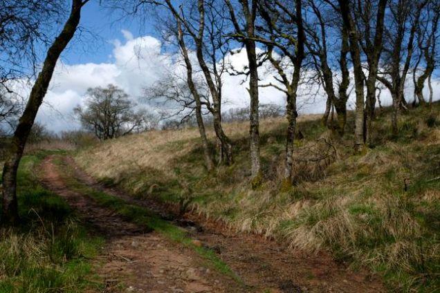 Track, trees, blue sky