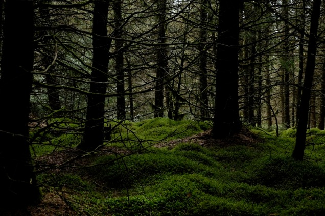 Commercial forest, moss, evergreen trees