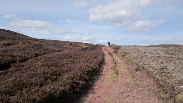 A track of pink sand and rock through heather to a walker on the skyline