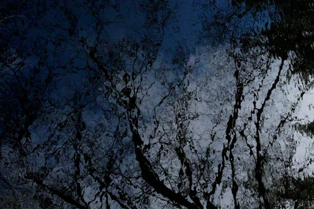 Reflections of branches and sky in dark water