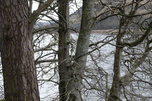 View of Loch St Mary through leafless trees